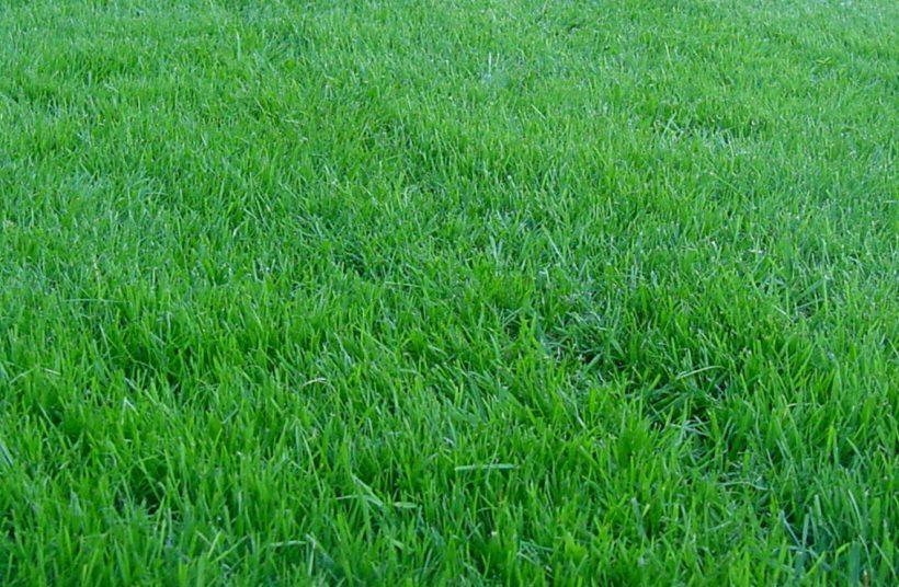 Как вырастить газон и ухаживать за ним