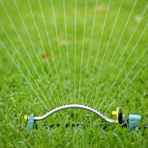 Полив травяного газона