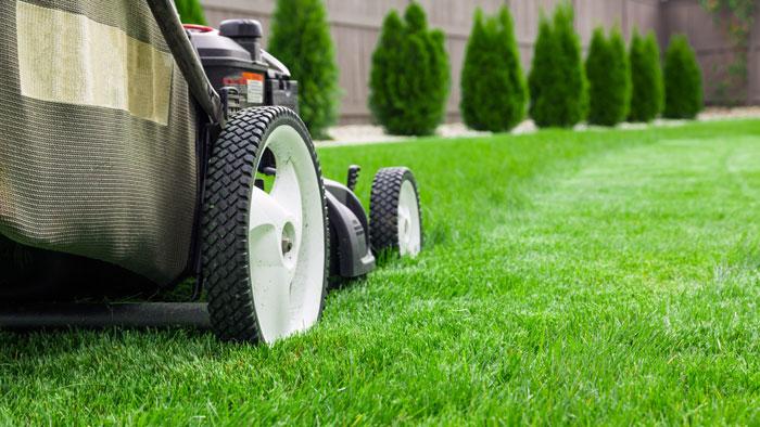 Скашивание газона